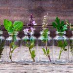 10 hierbas aromáticas que puedes cultivar en tu casa en agua