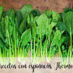 30 recetas con espinacas con thermomix