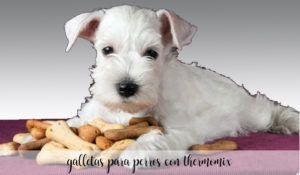 Galletas para perros con Thermomix